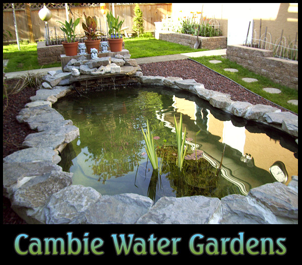Koi pond info pond supplies how to build a garden pond for Garden pond design and construction