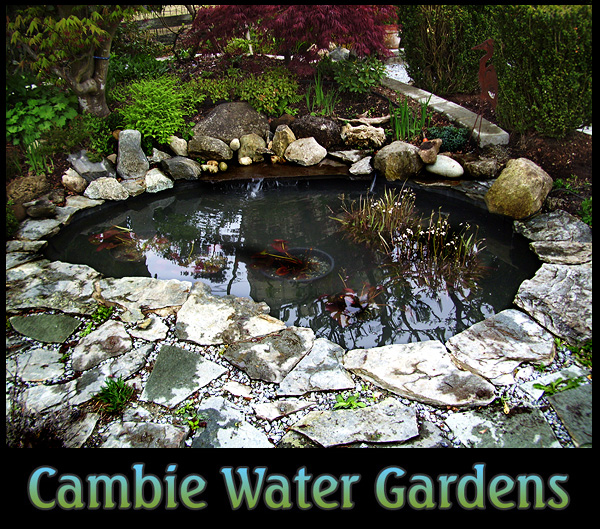Vancouver water garden and pond for Pond building supplies